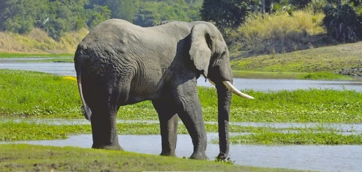 Double beauty: Elephant and the Urema river. (Photo by Jean-Paul Vermeulen):http://on.fb.me/T9Y30W