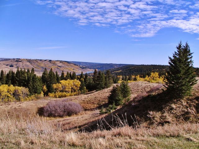 Cypress Hills Interprovincial Park - Alberta side, near the Town of Elkwater.