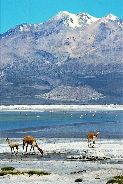 Lauca National Park, #Chile