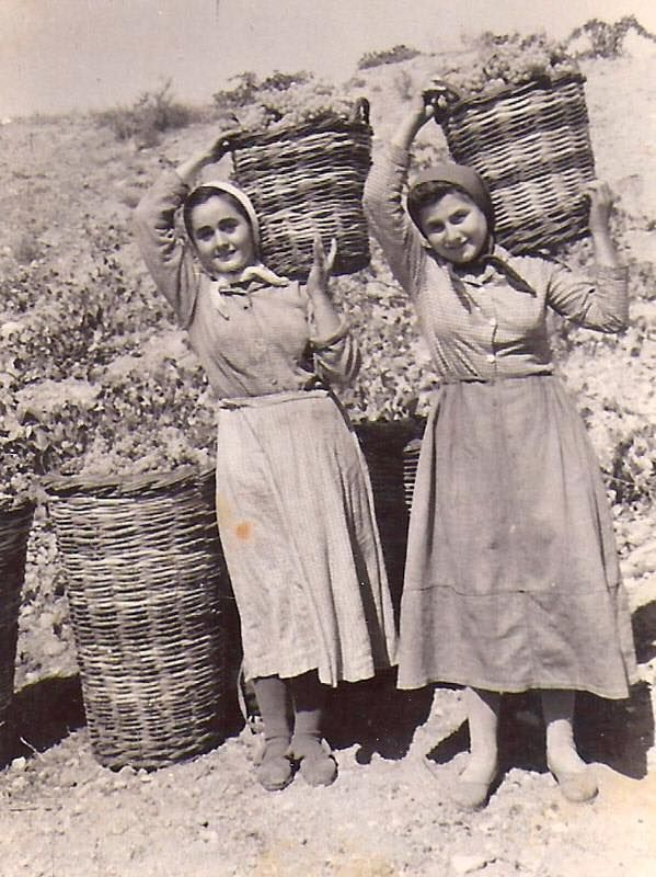 Grape harvest time in Greece, vintage photo when values mattered - Ελλάδα, τρυγώντας το αμπέλι