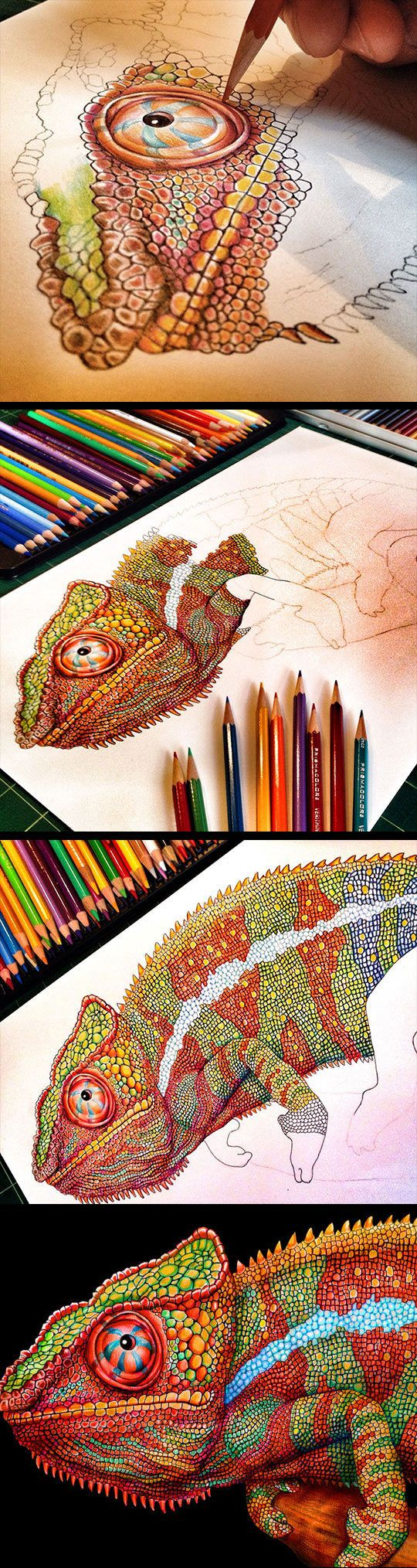 The Most Detailed Drawing Of A Chameleon by Tim Jeffs Art