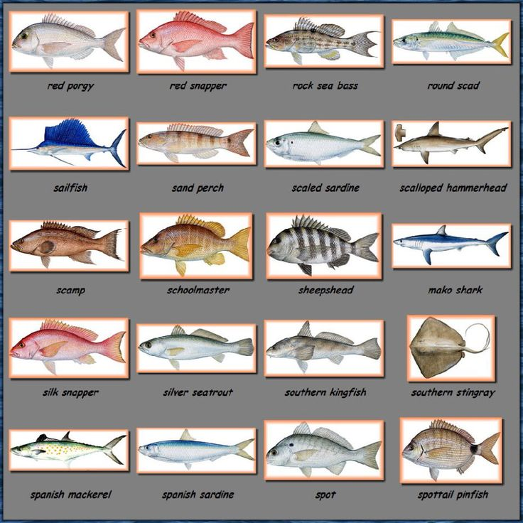 Fish species of the gulf of texas baby misc fishing sh for Texas fish species