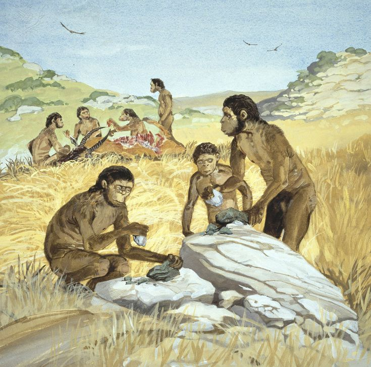 Homo habilis The first hominid species to make stone tools, Homo habilis - meaning handyman