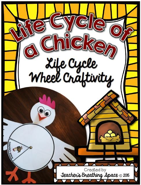 Life Cycle of a Chicken --- Life Cycle Wheel Craftivity!