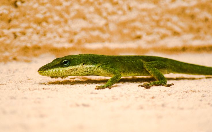 """I think he was a little like the lizard that changes color with its surroundings. He appeared far more a gentleman in a gentleman's house. In that inn, I saw him for what he was. And I knew his color there was far more natural than the other.""  ― John Fowles"