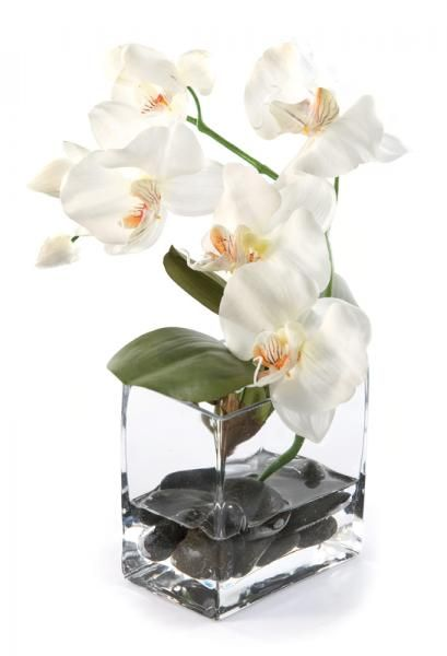 Phalaenopsis Orchid and leaves in a glass tank vase, with black stones, set in Still Water™. White. Height 20cm. €25.00