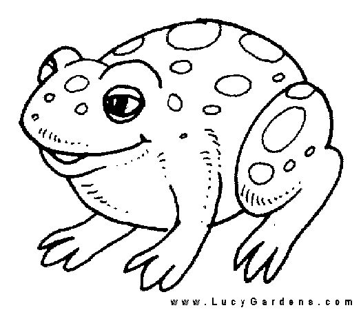 frog coloring pagesgif 524450