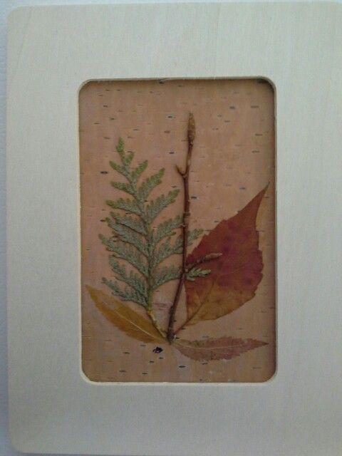 Cadre végétal de feuillage et de branches sur écorce de bouleau