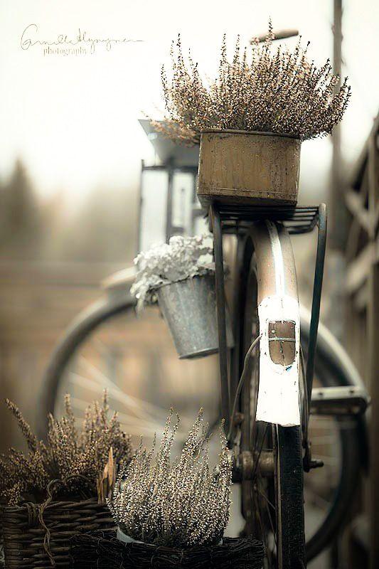 autumn whispers..