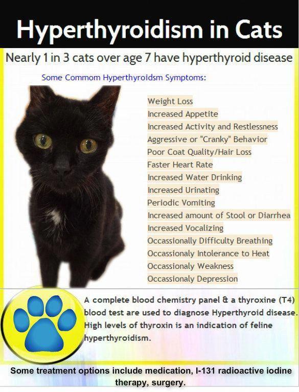 Hyperthyroidism In Cats Hyperthyroidism In 2020 Feline