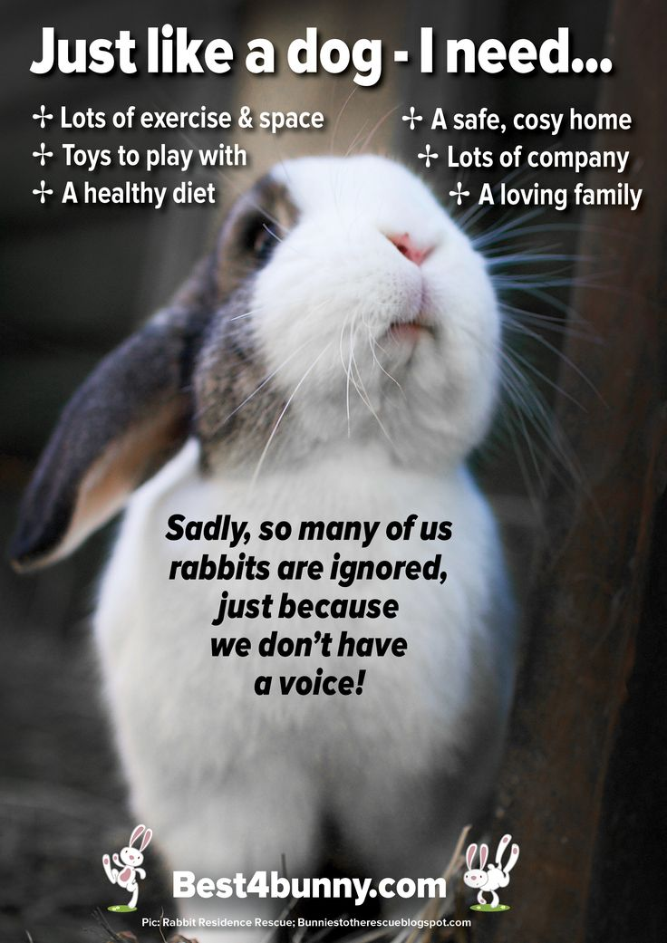 It's so sad that so many people fail to know what rabbits need to live a happy life, yet so many will know exactly what a dog needs. http://best4bunny.com/bunny-care/