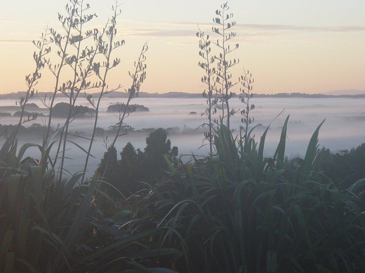 Sunrise at the Lodge on a winters morning.  Fog lingering in the valley.  #lodge #matakana #auckland #nz