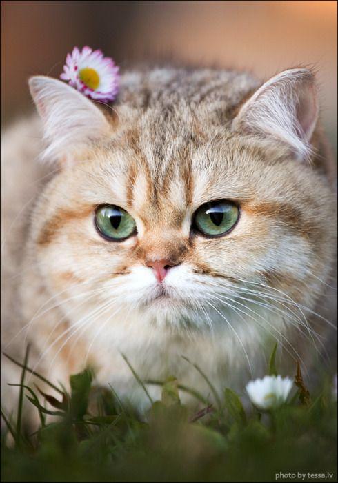 Flower baby ♥: Beautiful Cat, Kitty Cat, Big Fat Cat, Flowers Children, Funny Cat, Flowers Cat, Ears Flowers, Baby Cat, Cat Lady