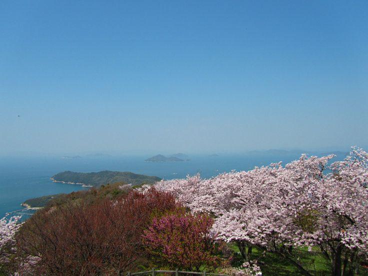 Mt.Shiude. Kagawa Japan. Nice SAKURA view. 香川県三豊市にある紫雲出山からの景色