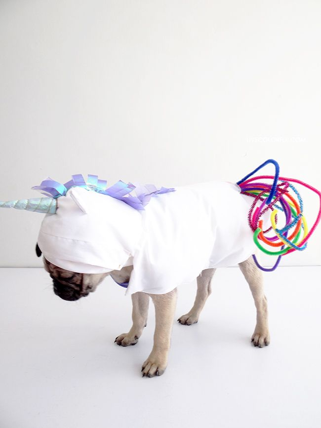 Como hacer un disfraz de unicornio ridículamente adorable para tu perro este Halloween! | LiveColorful.com/es