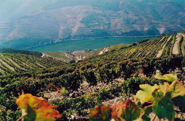 Die Serra Duoro mit den Weinbergen der Quinta do Infantado. Hier gedeihen die Reben für unseren neuen, exklusiven Bio-Portwein!  Vielen Dank an das Weingut für die tollen Bilder!