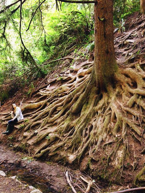 Hoyt Arboretum : Portland : Root System