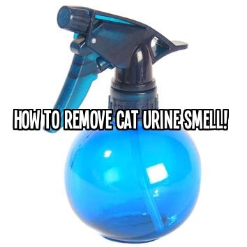 How to Remove Cat Urine Smell! -16 0z Hydrogen Peroxide -1 Teaspoon dishwashing liquid -1 Tablespoon Baking Soda // Mix together well, pour in spray bottle, douse area generously and wait to dry. Smell should be magically gone!