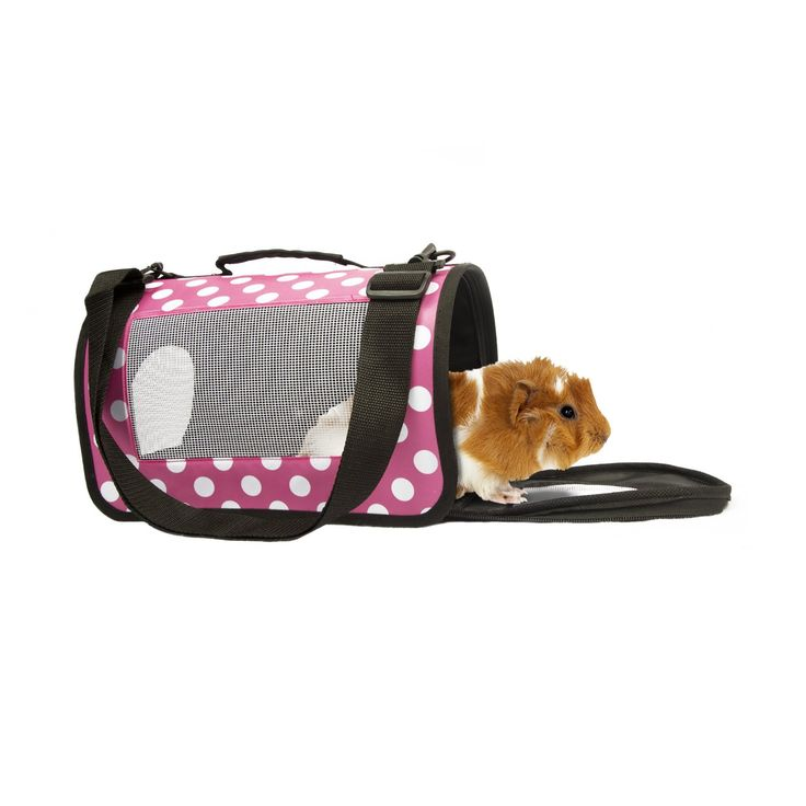 Life's+Fur-tas-tic+Fashion+Small+Animal+Carrier+Pink+Polka+Dot+-+Carry+your+small+furry+friend+with+style+in+this+fashionable+pet+carrier.+Designed+for+comfort+with+vents+to+provide+air+flow+for+your+ferret,+rabbit,+guinea+pig,+or+other+small+animal. - http://www.petco.com/shop/en/petcostore/product/lifes-fur-tas-tic-fashion-small-animal-carrier-pink-polka-dot