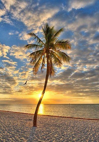 Key West Sunrise     Photo Ferrell McCollough, Flickr http://www.flickr.com/photos/beforethecoffee/2253003712/