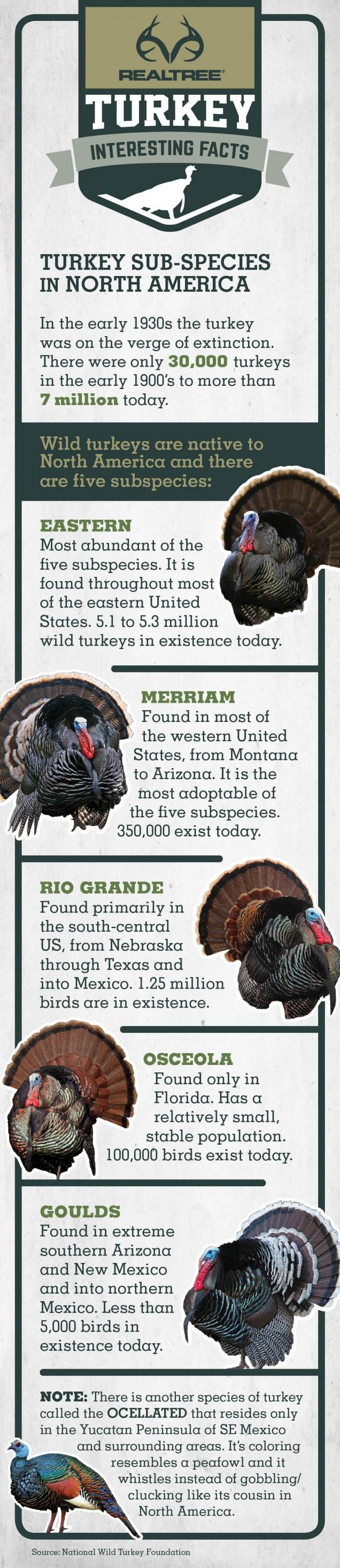 Turkey Facts: Turkey Sub-Species in North America  #Realtreeinfographics