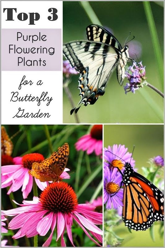 Setting for Four: My Top 3 Purple Flowering Plants for a Butterfly G...