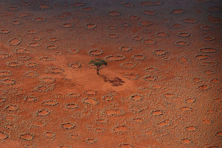 """I """"cerchi delle fate"""" fatti dalle termiti. Science svela la natura dei piccoli anelli di vegetazione che delimitano aree sabbiose ricche d'acqua. Tutto merito del lavoro di migliaia di insetti, per conservare le riserve idriche. Credits immagine: N.Juergens. Leggi l'articolo su Galileo: http://www.galileonet.it/articles/51549102a5717a5661000100"""
