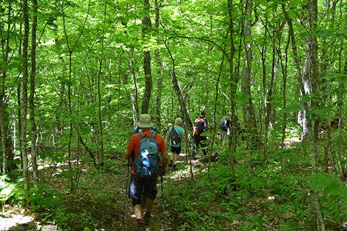 Willoughby Forest (Vt) Crédit photo M.-C. Pelletier