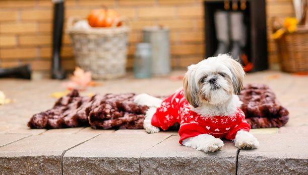 Bailey & Bella Plush Pajamas Red