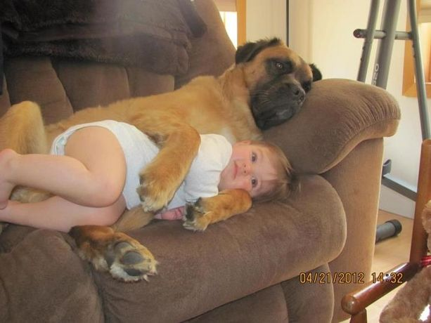 "Hey @Kristy Poole! I see Tank & Roxy like this in the future. ;-)  A pinner wrote, ""This is Alexus, and Cassius, a 7-year-old bull mastiff and Alexus' best snuggle mate. Happiness is a warm dog."""