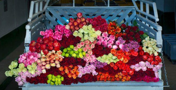 5 Peluang Bisnis Tanaman Hias Bunga Mawar