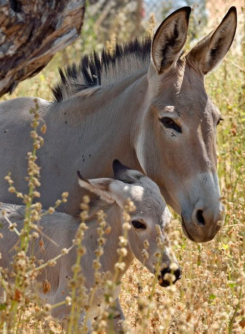 Sweet donkeys