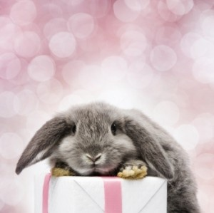 634 best simply bunnies images on pinterest 5 easter hostess gifts sure to impress your mil or anyone else negle Choice Image