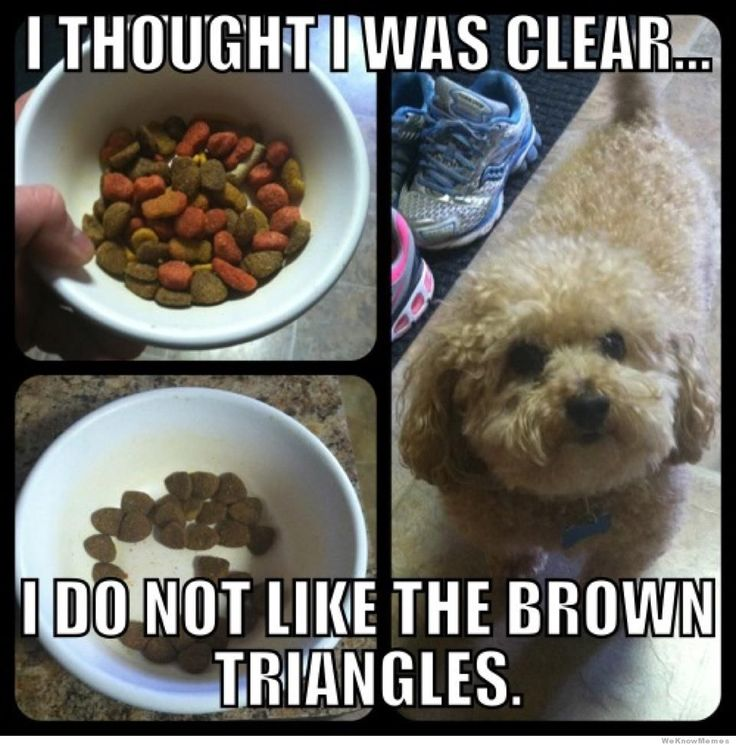 Hahahahaha! this is exactly what romeo does: Puppies, Cat, Funny Dogs, Brown Triangles, Pet, Picky Eater, Dogfood, So Funny, Dogs Food