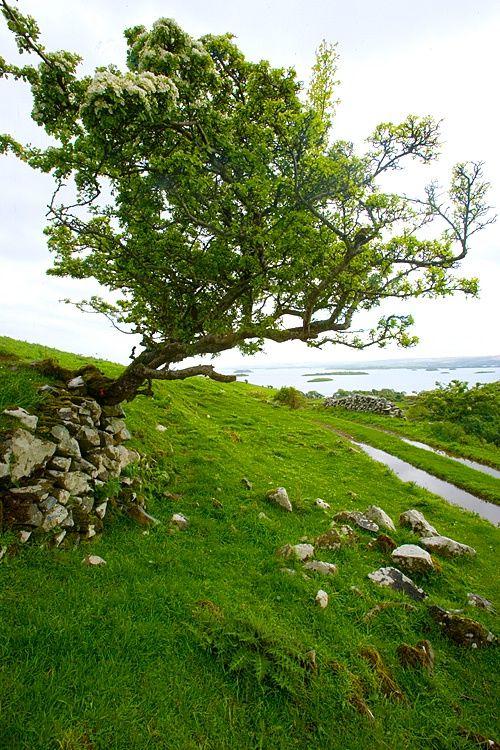 25 best ideas about county mayo on pinterest northern for Garden design ideas northern ireland
