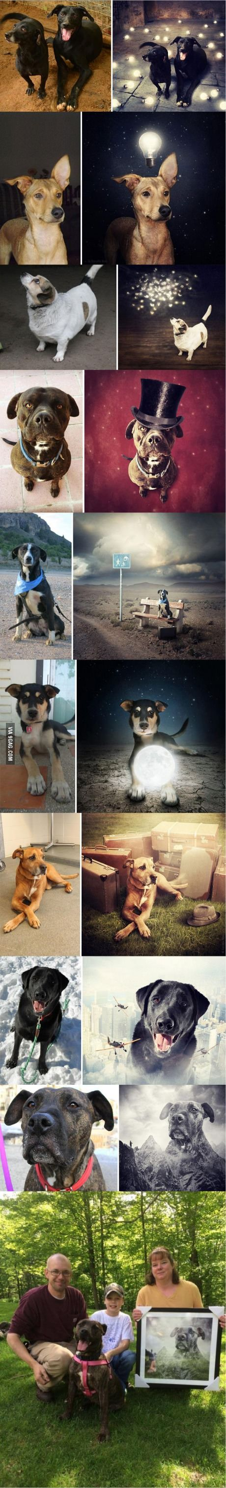 Photographer creates surreal montages with abandoned dogs to encourage adoption