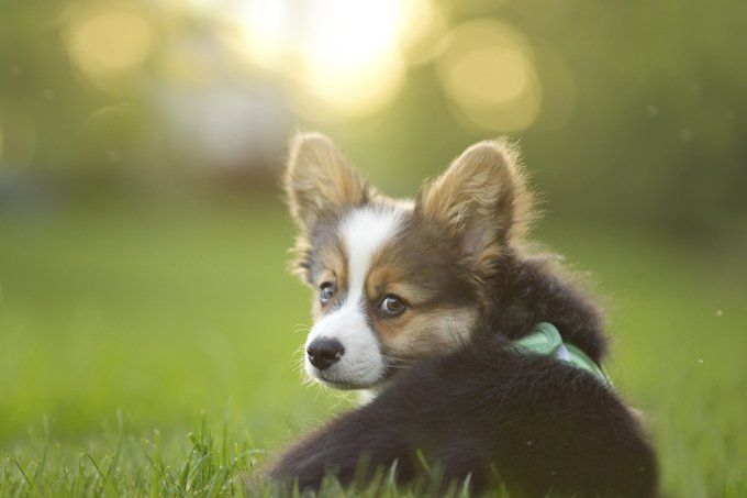 30 Amazing Dog And Puppy Facts To Share With Kids [PICTURES] - Dogtime