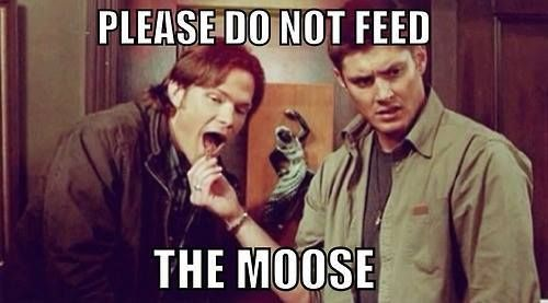 Can't feed the angels and now the moose?!? What is this world coming to?<<<'Tis a dark time, we are forbade the feeding of angels and now the feeding of the moose. I do believe that apocalypse take 3 is upon us!