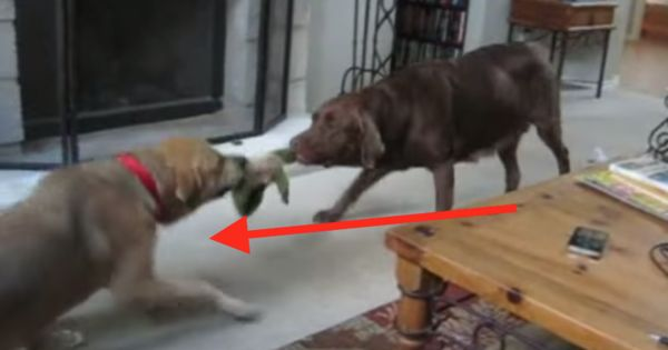 Just Keep Your Eyes On The Dog To The Left. This Is Brilliant - LOL!