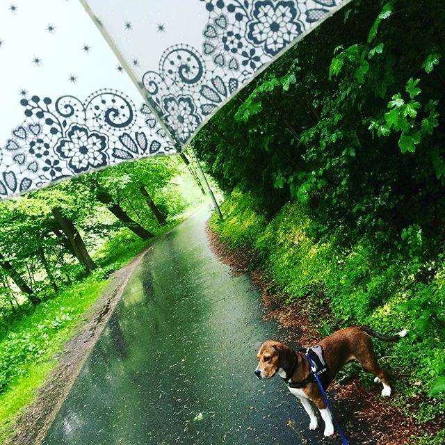 Hunden må luftes uanset vær. Så er det godt man har så stor og fin paraply…