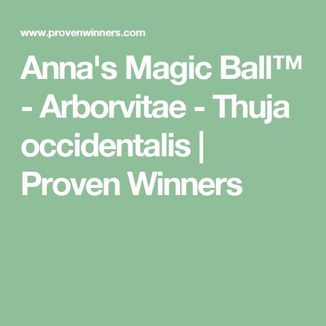 Anna's Magic Ball™ - Arborvitae - Thuja occidentalis | Proven Winners
