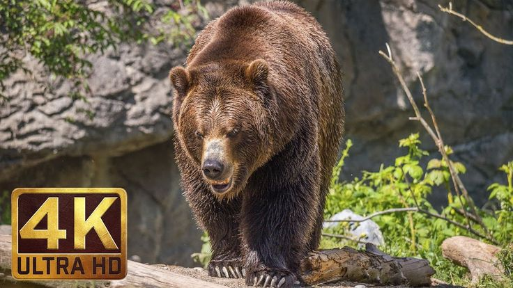 4K Ultra HD Video of Wild Animals - 1 HR 4K Wildlife Scenery with Floati...