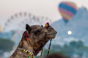 Festivals and Events: What's On in India in November 2016: Pushkar Balloon…