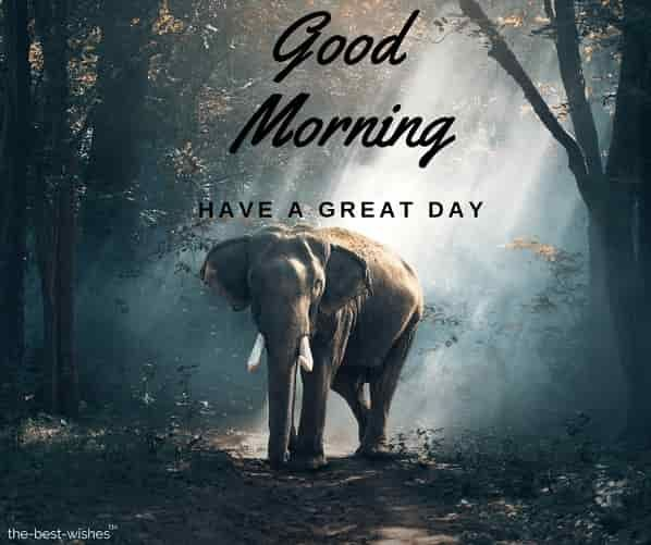 150 Fresh Beautiful Good Morning Images With Nature Good Morning Quotes Good Morning Images Good Morning Cards