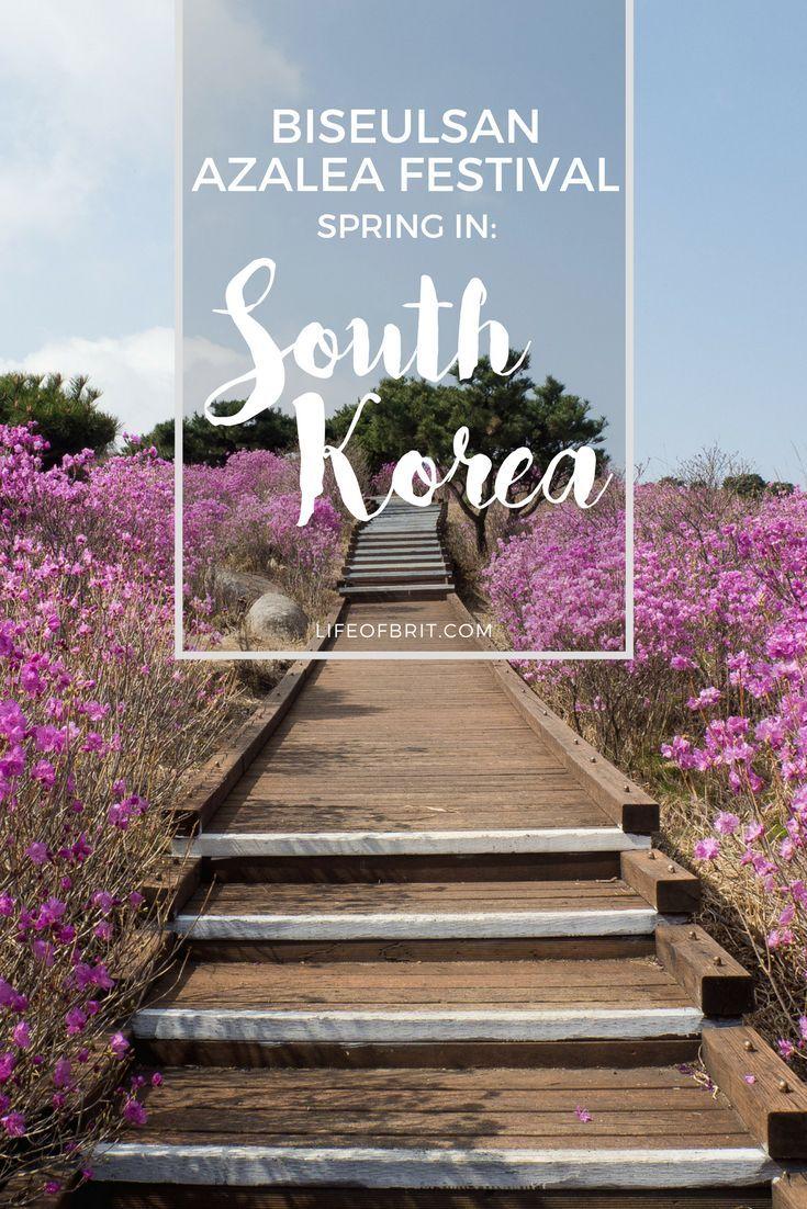 Biseulsan Azalea Festival Spring In Korea Life Of Brit Azalea Festival Festivals Around The World Festival