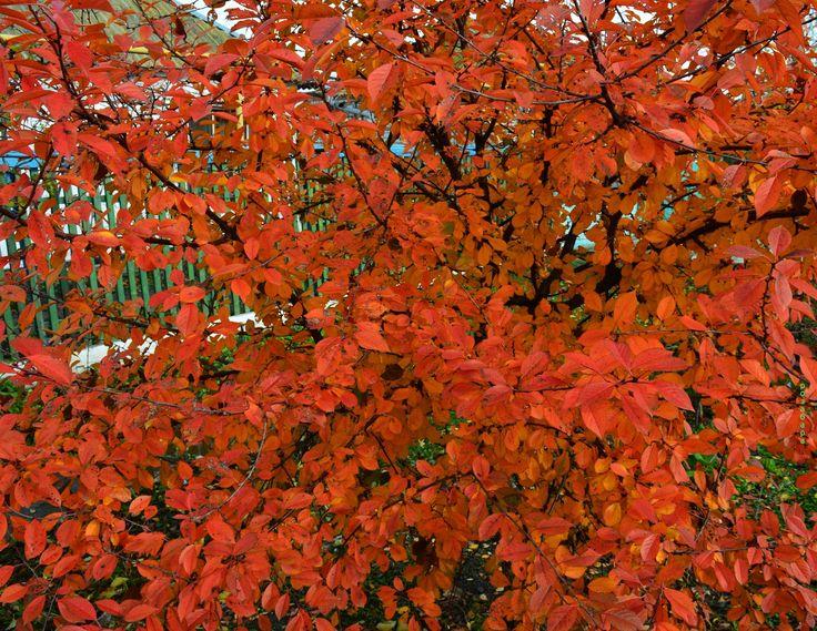дерево красочное - null