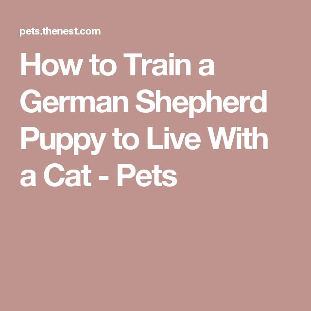 How to Train a German Shepherd Puppy to Live With a Cat - Pets