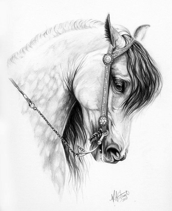 Bridled horse facial profile side view pencils art drawings horse drawings horses - Dessin cheval realiste ...