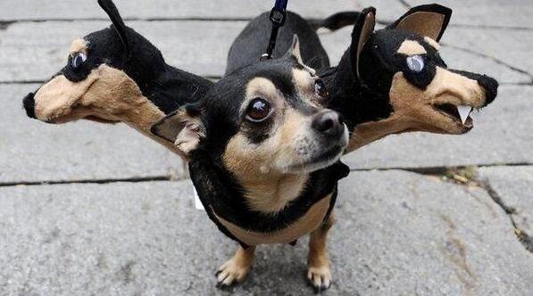 Se que esto no es de moda pero acepta que son increíbles 50 Divertidos disfraces de Halloween para tu perro