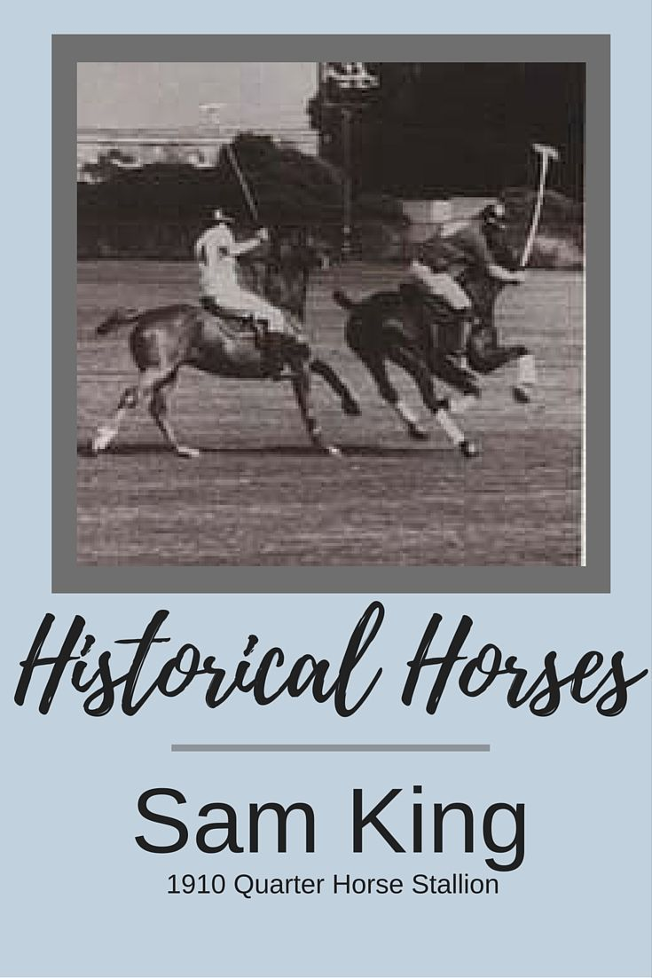 a history of the quarter horse Curious about those great foundation horses that shaped the american quarter horse breed then grab a ringside seat and hear the stories from three.